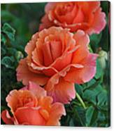 Perfectly Peach Canvas Print