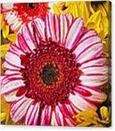 Pink And Yellow Mums Canvas Print