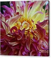 Pink Curls Canvas Print