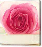Pink Rose And Teacup Canvas Print