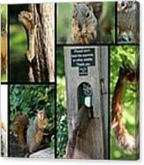 Please Don't Feed The Squirrels Canvas Print