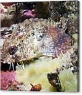 Poacher Fish Canvas Print
