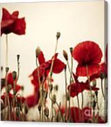 Poppy Flowers 03 Canvas Print