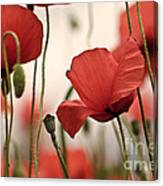 Poppy Flowers 04 Canvas Print