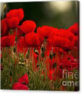 Poppy Flowers 05 Canvas Print