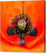 Poppy Heart Canvas Print