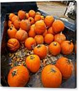 Pumpkins In The Back Canvas Print