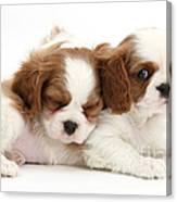 Puppies Canvas Print