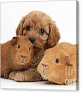 Puppy And Guinea Pigs Canvas Print