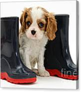 Puppy With Rain Boots Canvas Print
