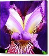 Purple Iris Macro Canvas Print