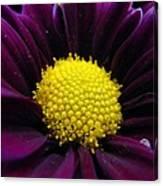 Purple Jewel Canvas Print