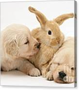 Rabbit And Puppies Canvas Print