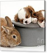 Rabbit And Spaniel Pups Canvas Print