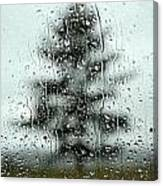 Rain Tree Canvas Print