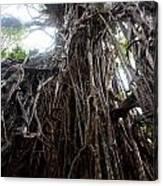 Rainforest Tree Canvas Print