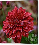Red Petals Canvas Print