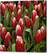 Red Tulip Heaven Canvas Print