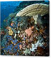 Reef Scene With Corals And Fish Canvas Print