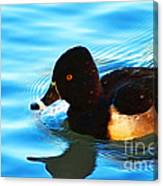 Ringbill Duck Canvas Print
