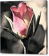 Rita Rosebud Pink Canvas Print