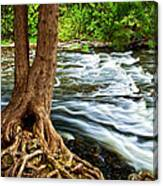 River Through Woods Canvas Print