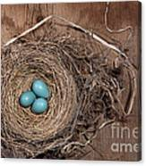 Robins Nest With Eggs Canvas Print