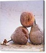 Rotten Pears And Apple. Canvas Print