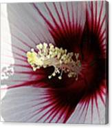 Ruby And White Hibiscus Canvas Print