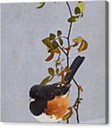 Rufous-sided Towhee Canvas Print