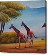 Running Zebras Canvas Print