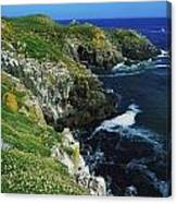 Saltee Islands, Co Wexford, Ireland Canvas Print