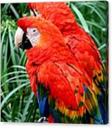 Scalet Macaw Canvas Print