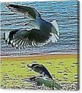 Sea Gulls In Flight  Canvas Print