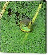Sea Of Green Canvas Print