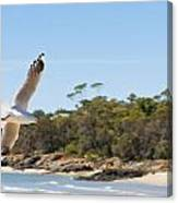 Seagull Spreads Its Wings On The Beach Canvas Print