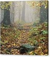 Shenandoah National Park In Virginia Canvas Print