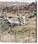 Short Eared Owl In Flight Canvas Print