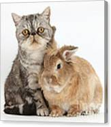 Silver Tabby Cat And Lionhead-cross Canvas Print