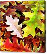 Simple Background From Autumn Leaves Canvas Print
