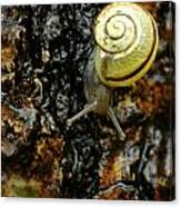 Snail, Pointe-des-cascades, Quebec Canvas Print