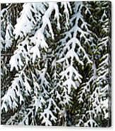 Snowy Fir Tree Canvas Print