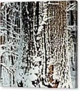Snowy Woods Canvas Print