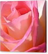 Soft  Rose Canvas Print
