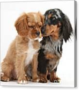Spaniel & Dachshund Puppies Canvas Print