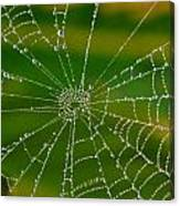 Spiderweb With Dew Drops Canvas Print