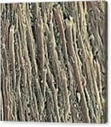 Spinal Cord, Sem Canvas Print