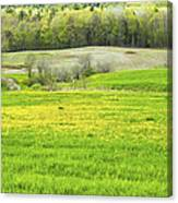 Spring Farm Landscape With Dandelion Bloom In Maine Canvas Print