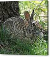 Spring Time Rabbit Canvas Print