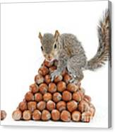 Squirrel And Nut Pyramid Canvas Print